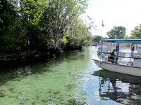 Canoeing and Swimming With Manatees in Florida